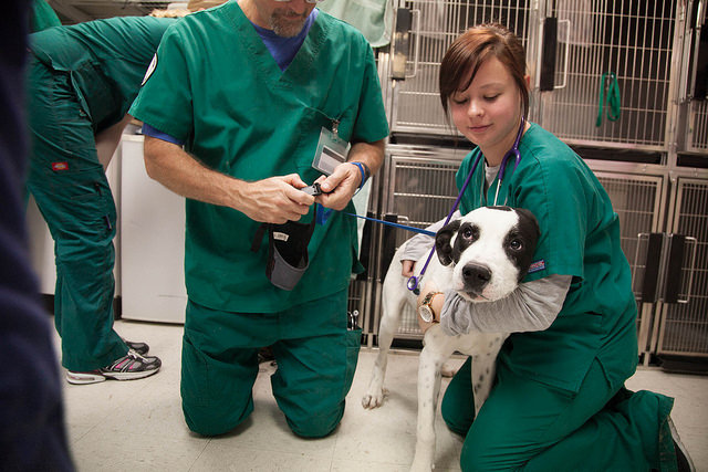 Difference Between Vet Tech and Vet Assistant