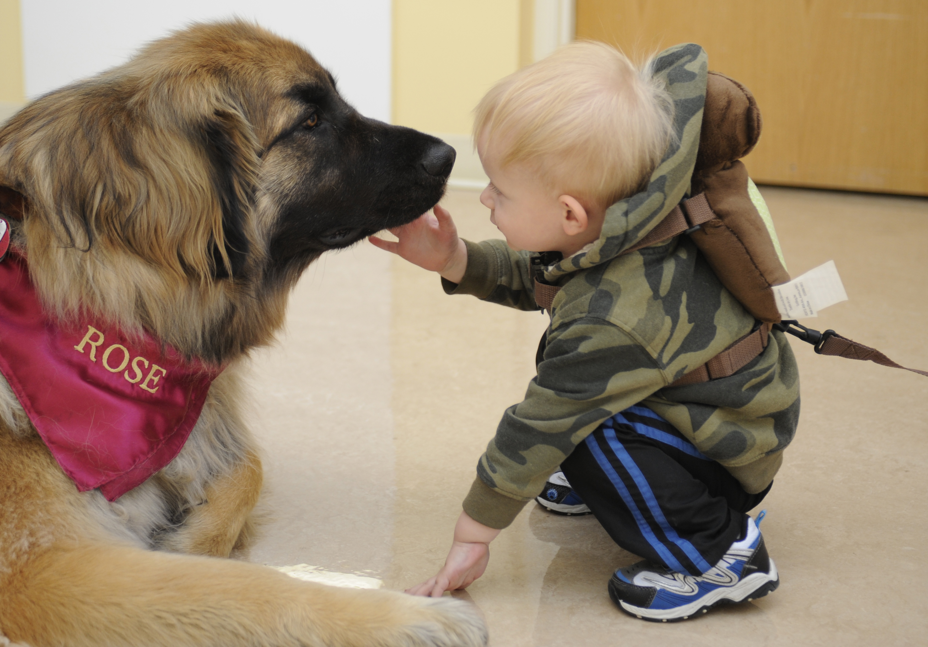Difference Between Service Dog And Comfort Dog