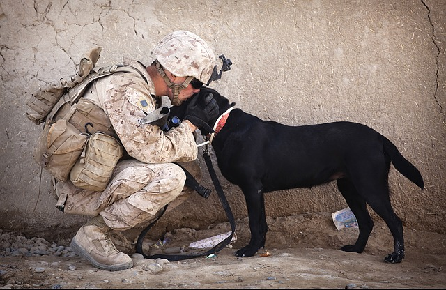 Service Canine Soldier Military Dog Companion