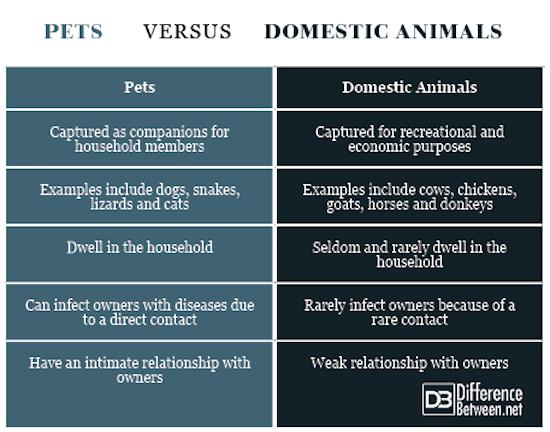 Pets VERSUS Domestic Animals