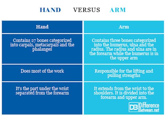 hand VERSUS arm