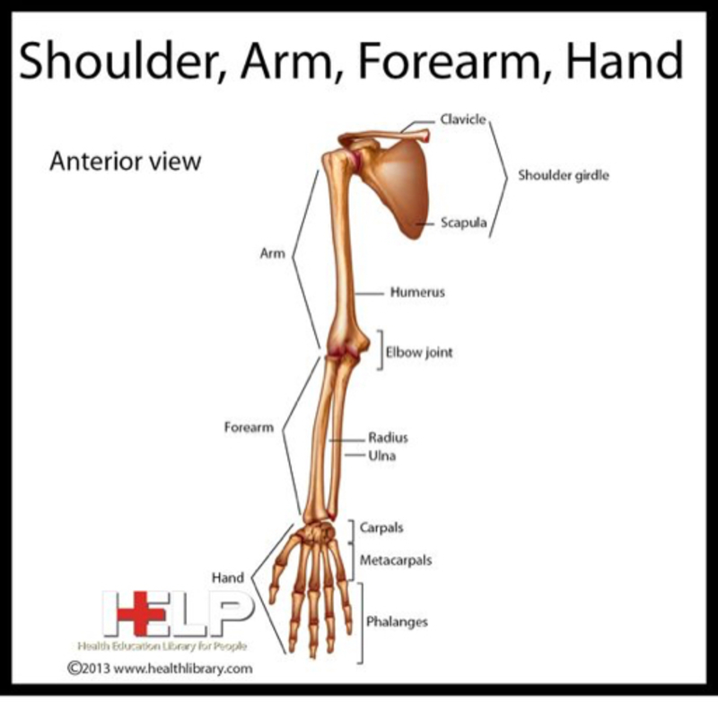 Difference Between Hand and Arm | Difference Between