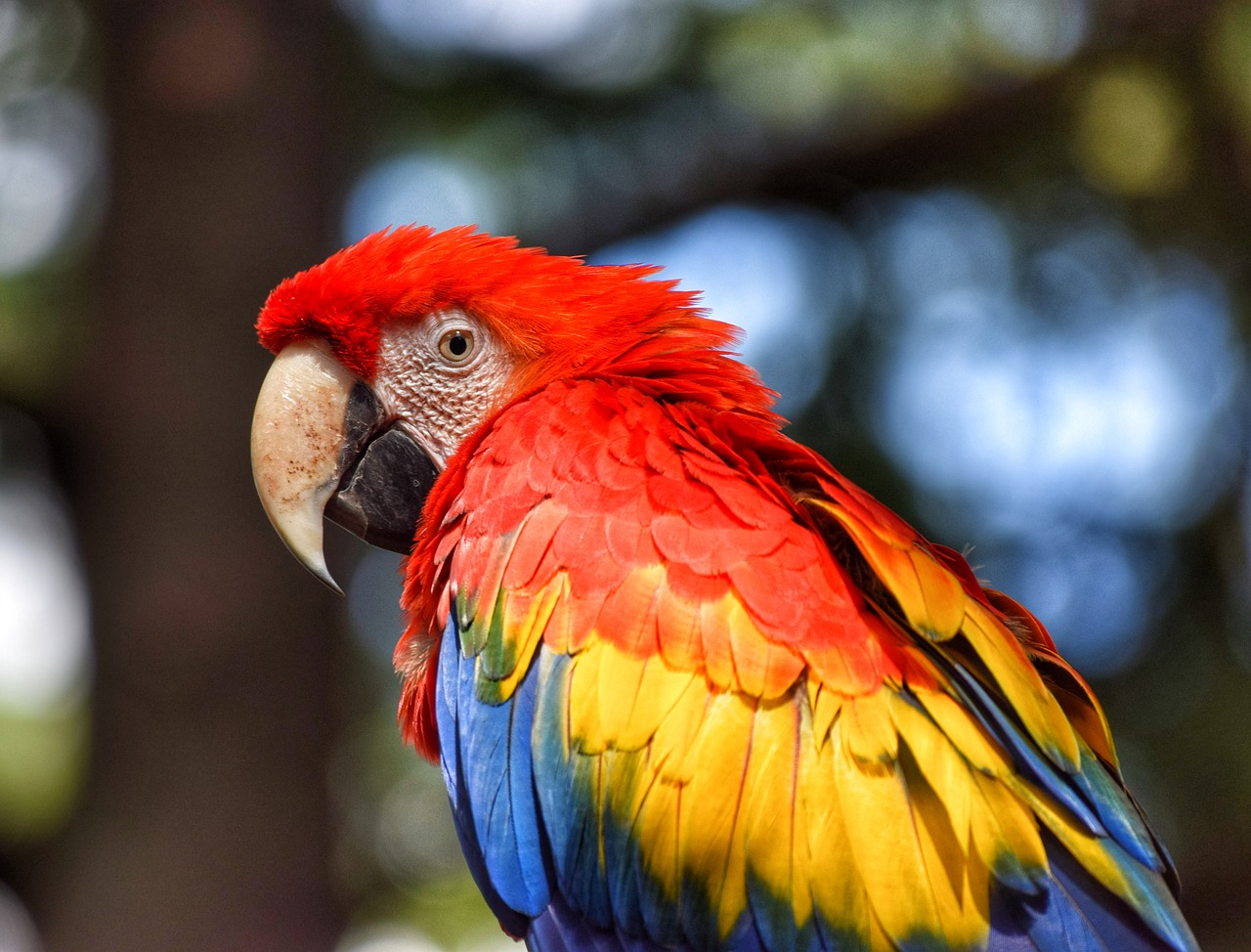 Difference Between Parrot and Macaw