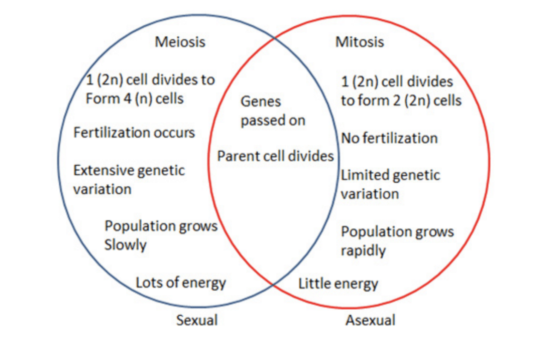 Bacteria reproduce asexually by mitosis diagram