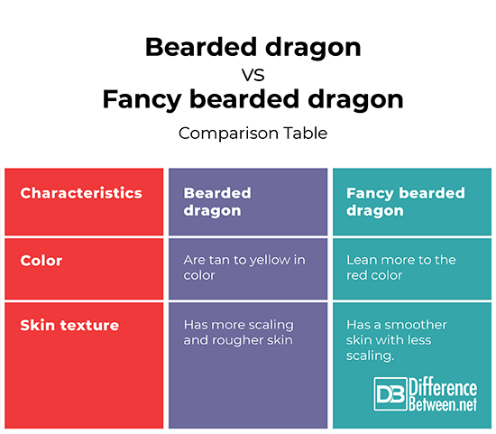 Essay on bearded dragons contrast and compare