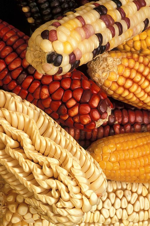 Difference Between GMO and Selective Breeding