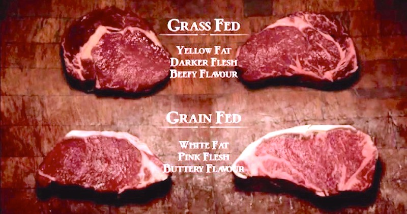 Difference between Grass Fed Beef and Grain Fed Beef