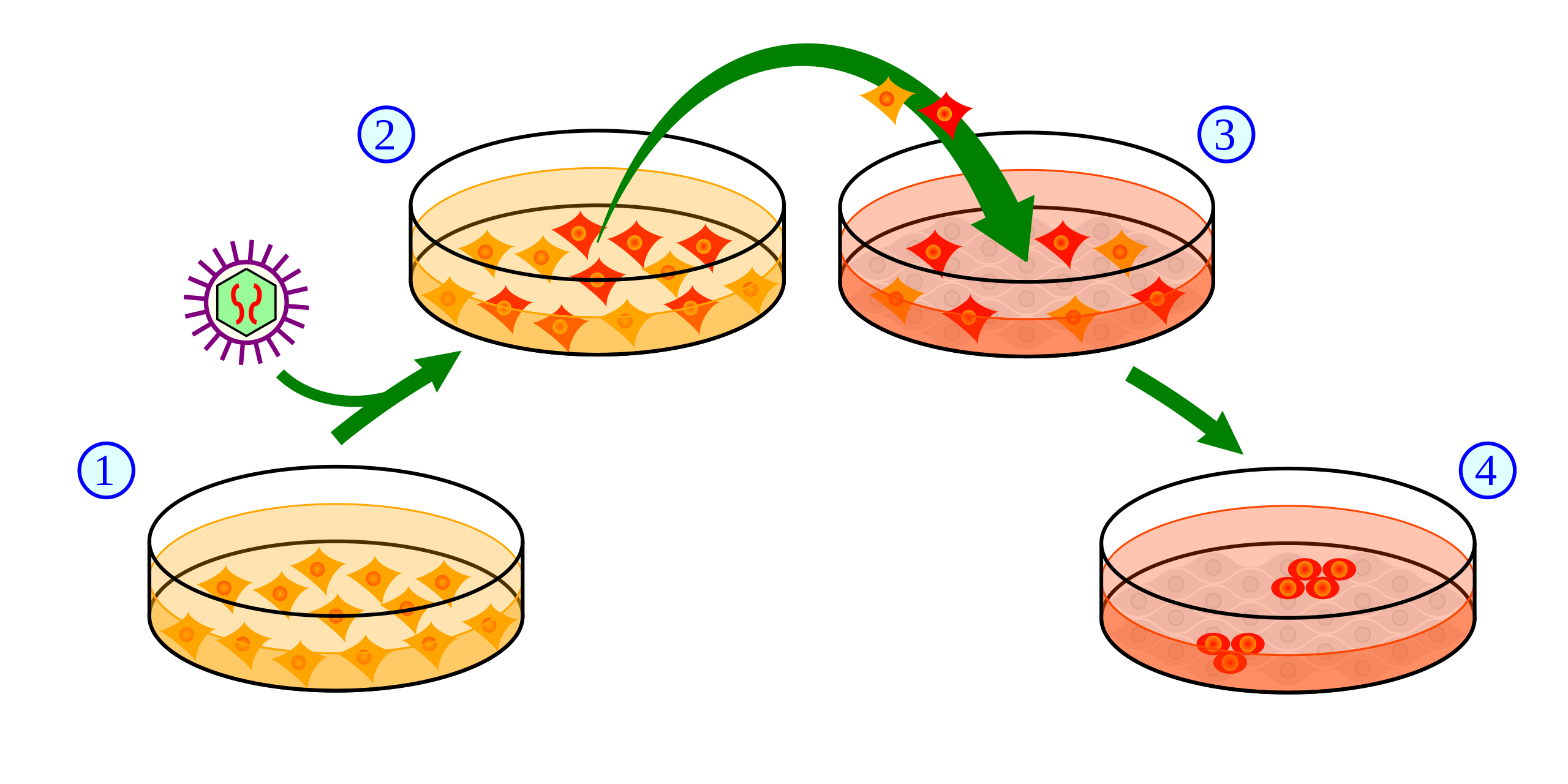 Difference Between Pluripotent and Multipotent Stem Cell