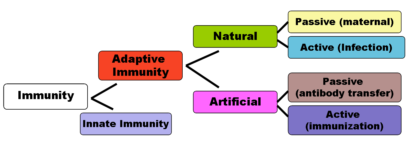 Difference Between Natural and Artificial Immune System