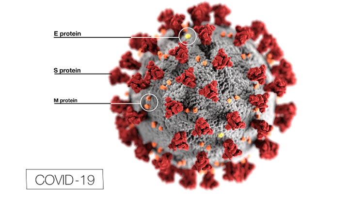 Difference Between Coronavirus and RSV