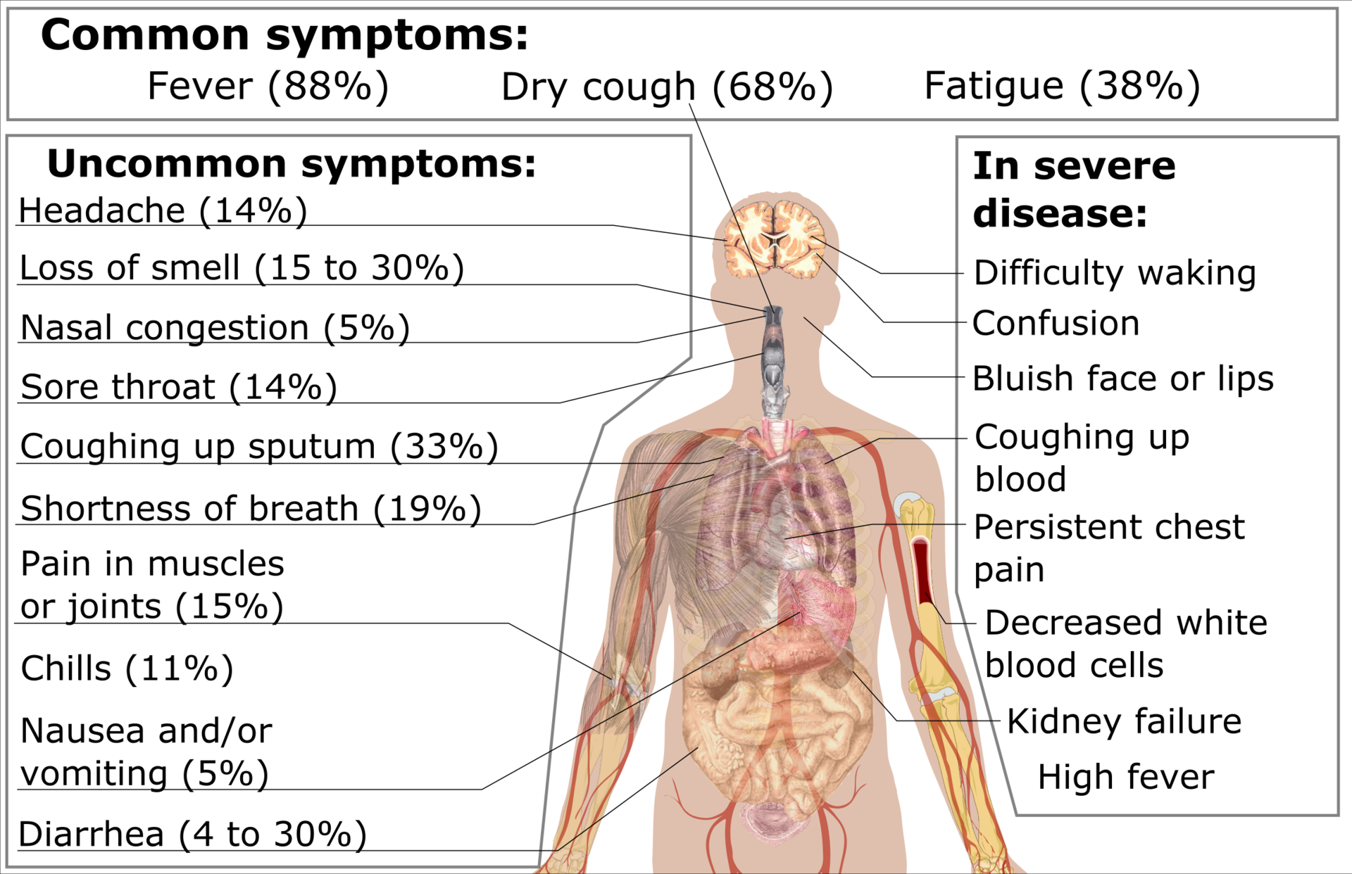 corona-virus-symptoms