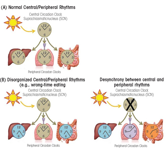 Difference Between Biological Rhythms and Circadian Rhythms