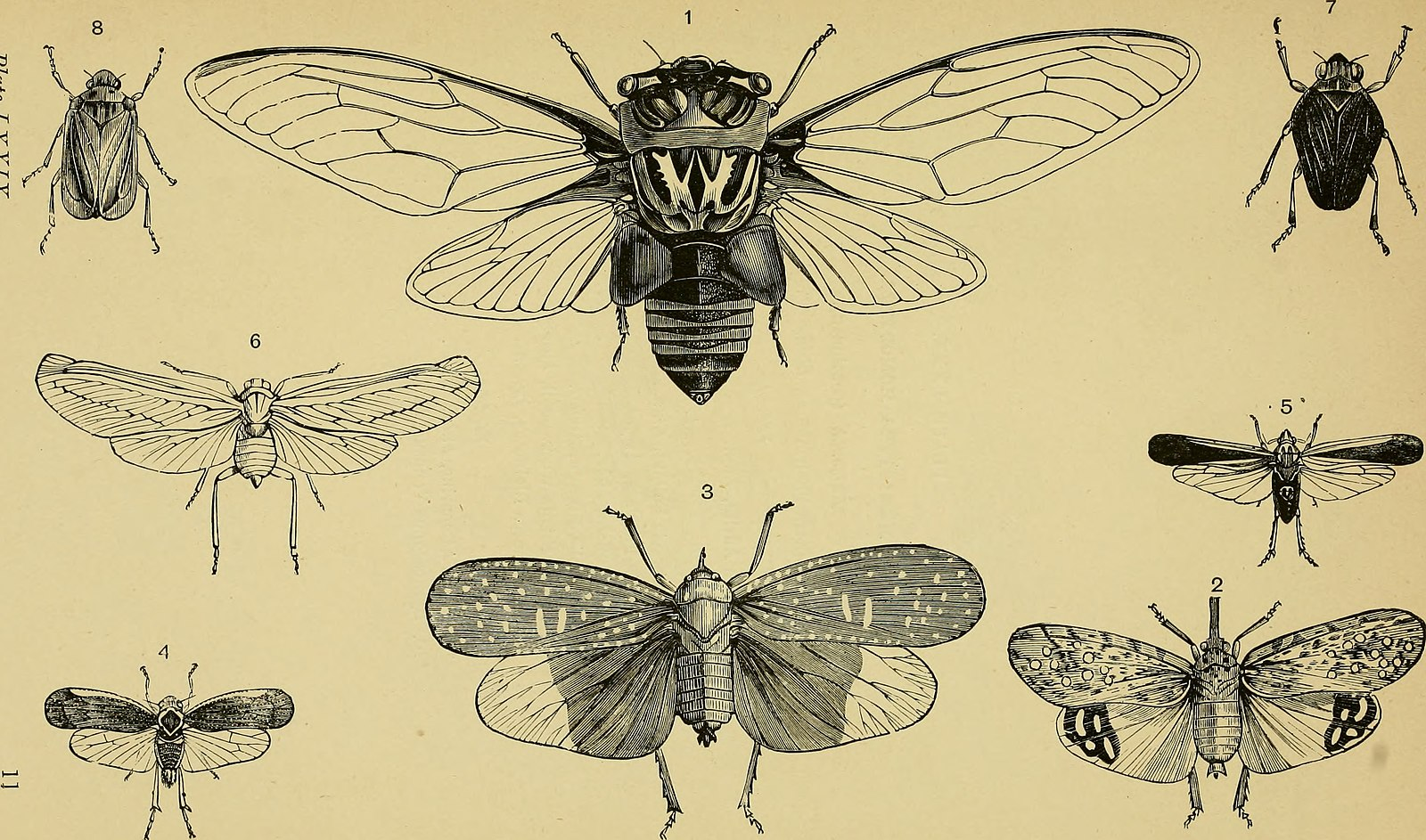 Difference Between Entomology and Zoology