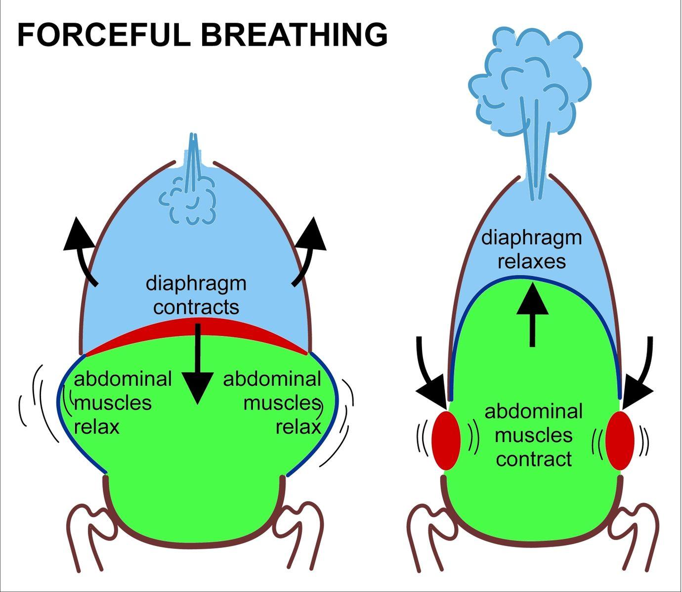 Difference Between Hemoptysis and Dyspnea