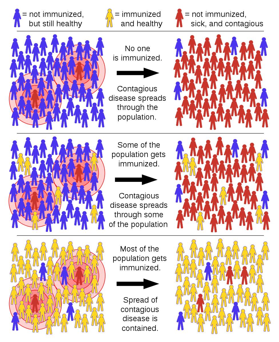 Difference Between Herd Immunity and Passive Immunity