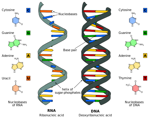Difference between RNA and DNA vaccines