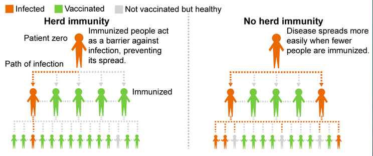 Difference Between Cellular Immunity and Herd Immunity