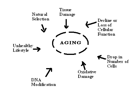 Difference Between Healthy Aging and Unhealthy Aging.