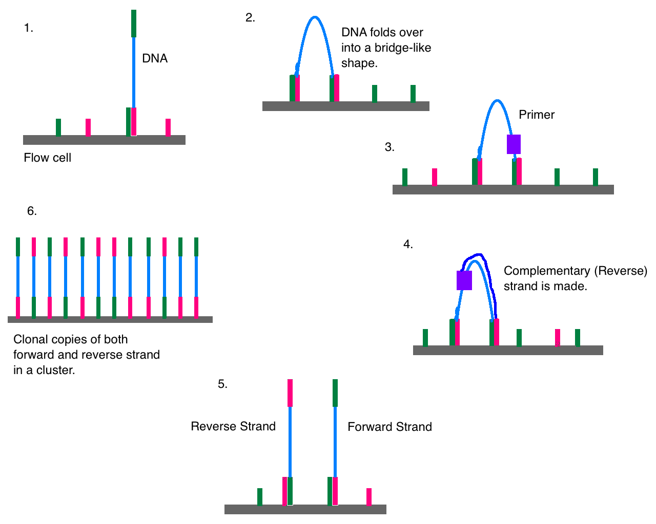 Difference Between Whole Genome Sequencing and Next Generation Sequencing