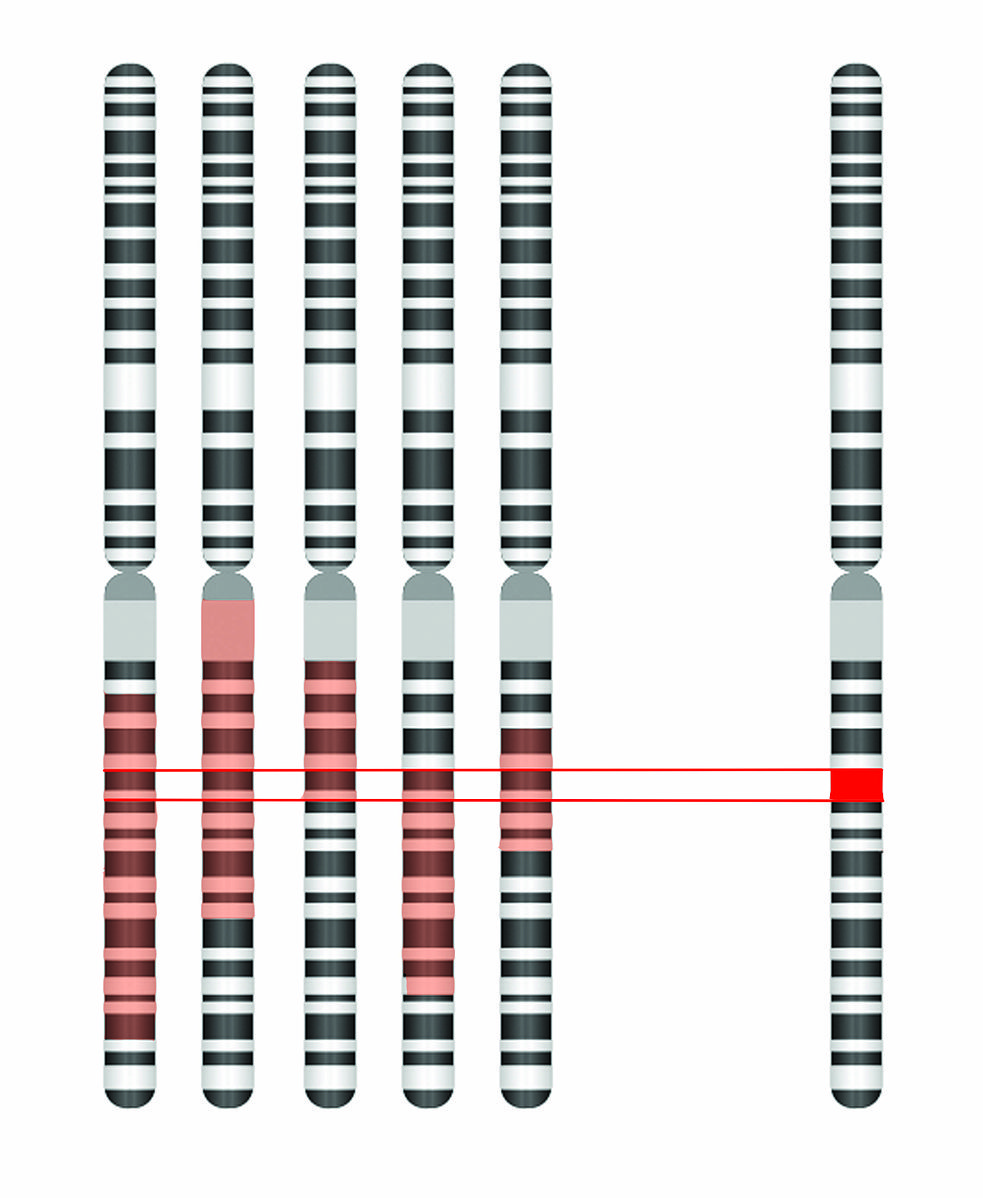 Difference Between Genome Sequencing and Genome Mapping