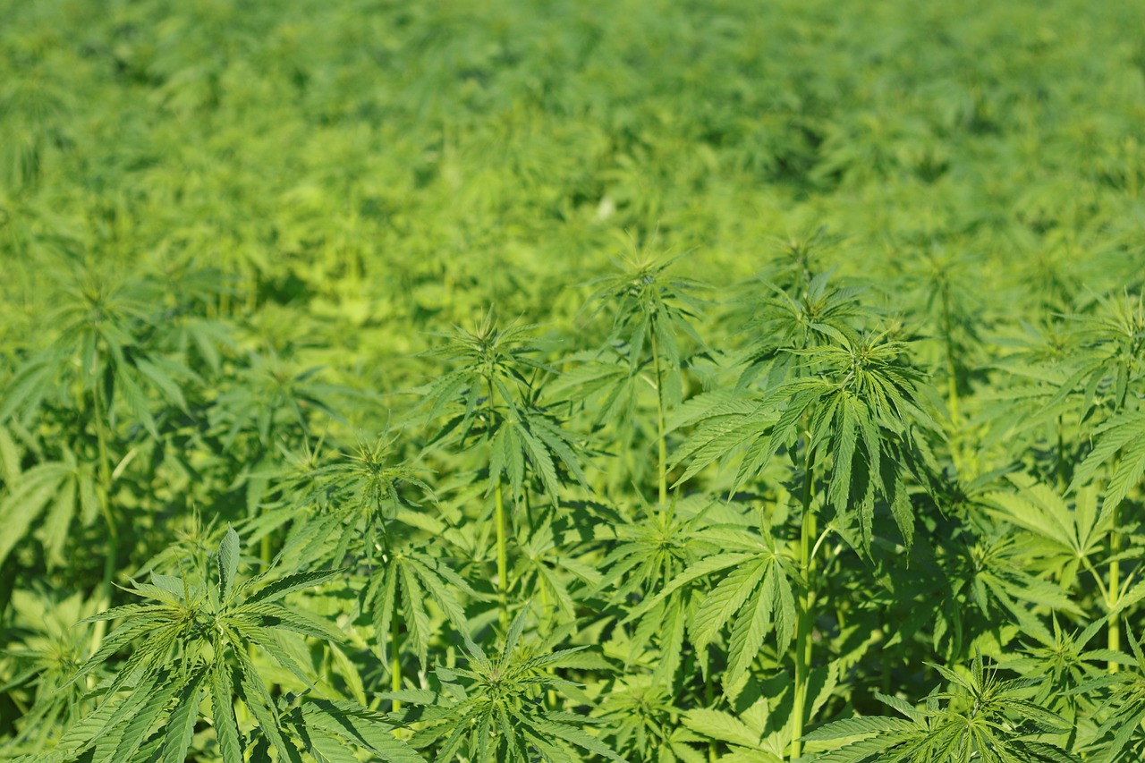 Difference Between Hemp and Jute