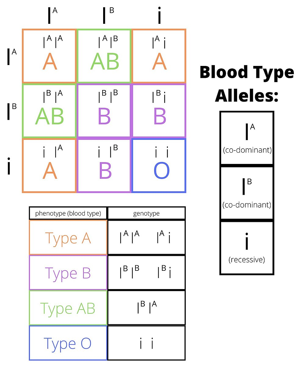 Difference between Blood groups