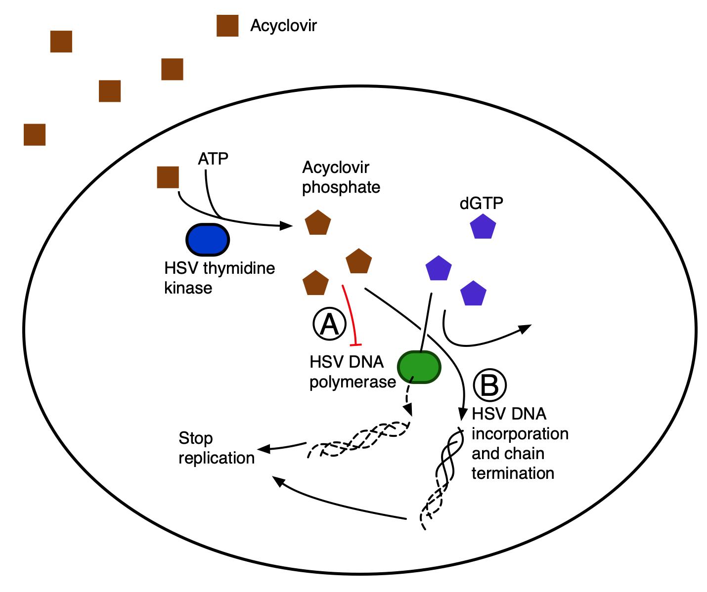 Difference Between Remdesivir and Acyclovir