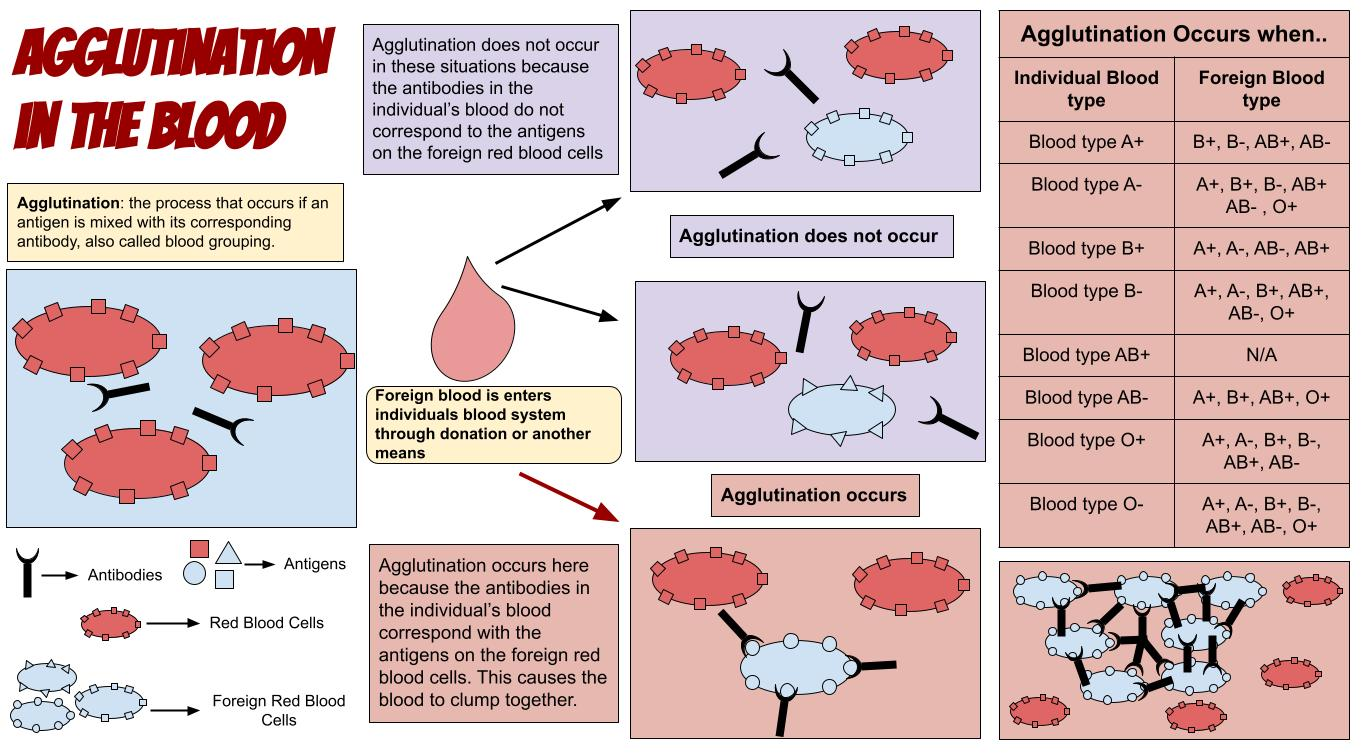 Difference Between Agglutination and Precipitation